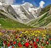 valley of flower